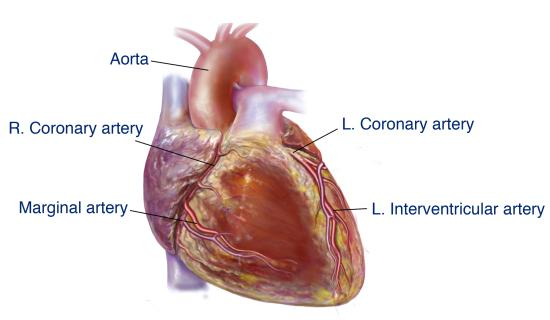 Ayurvedic remedies for heart disease