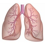 Ayurvedic treatment for Bronchial Asthma