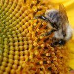 Ayurvedic Benefits of Honey