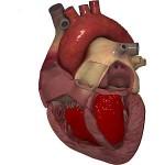 Ayurvedic remedies for heart disease