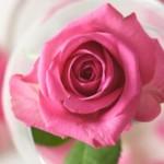 Ayurvedic Benefits of Rose Water
